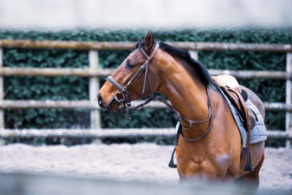 乗馬用の馬